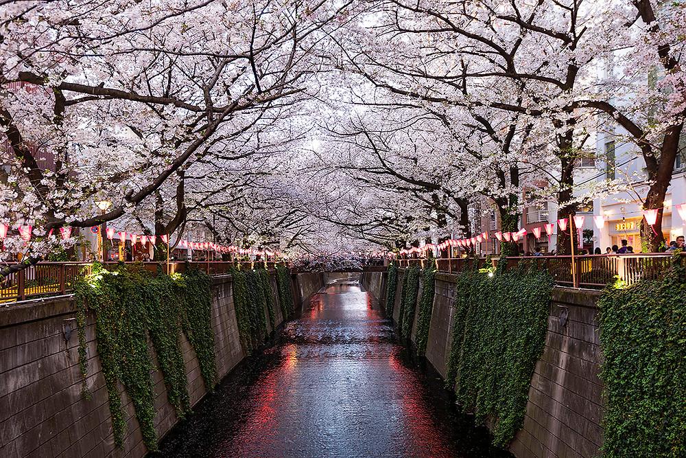 แม่น้ำเมกุโระ โตเกียว meguro river tokyo