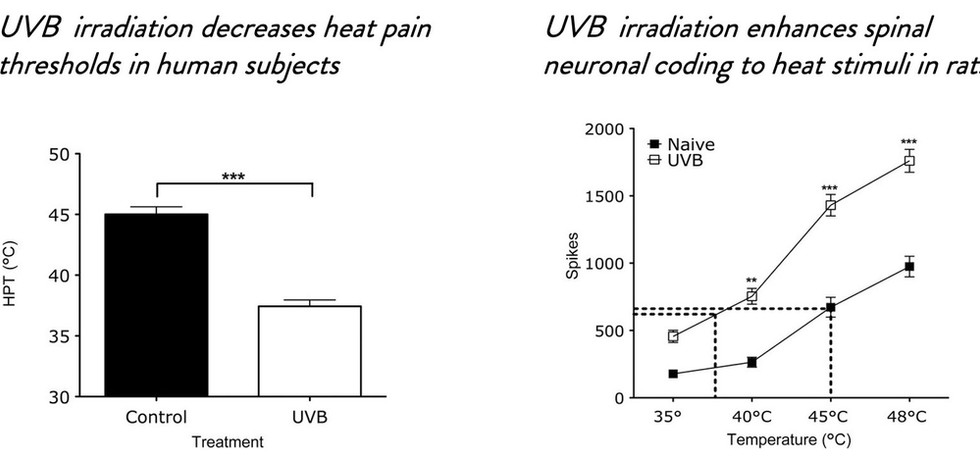 Human psychophysics and rodent spinal neurones exhibit peripheral and central mechanisms of inflammatory pain in the UVB and UVB heat rekindling models