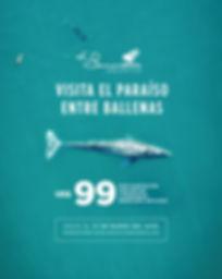 ESP_Ballenas_Feed.jpg