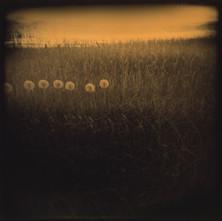 Dandelions, appleton farms photo, terri