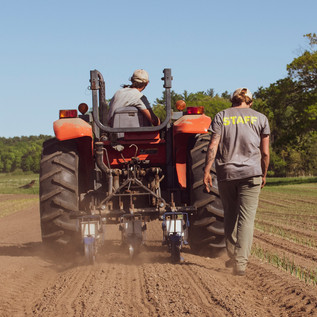 andrew and becca direct seeding parsnips