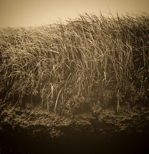 Crane Estate show 2017, Marsh Grass.jpg