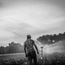 andrew, irrigation in Underhill 2, sept.