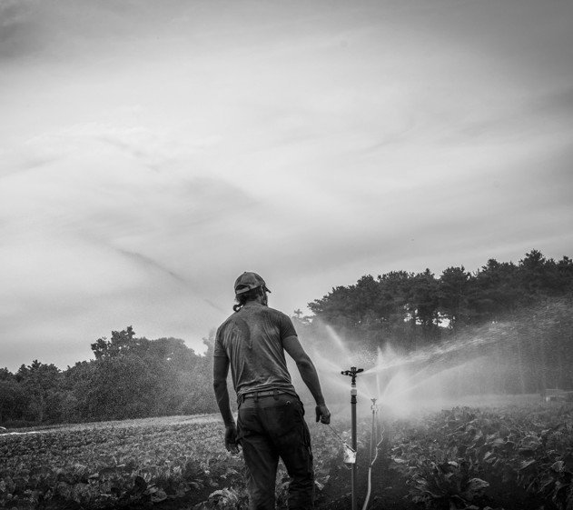 andrew, irrigation in Underhill 2, sept.