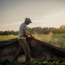 Andrew pulling up row cover in PYO, July