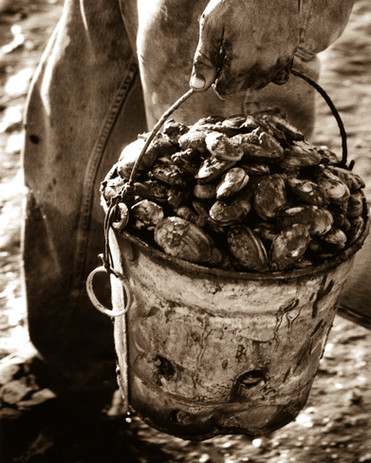 Bucket of Clams, Final High Res. cropped