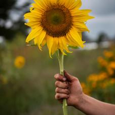 becca with sunflower, sept. 2020, terri