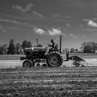 Ross on tractor, onions, appleton farms