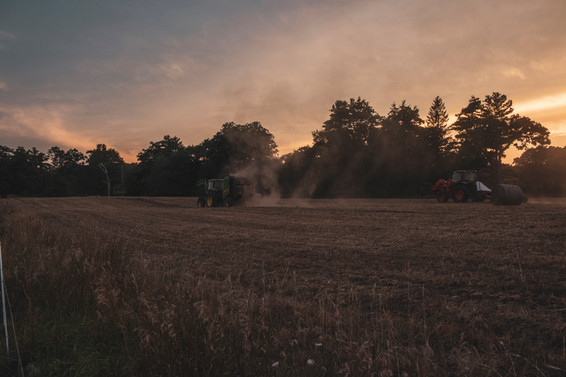 haying in homefield 1, august 2020, terr