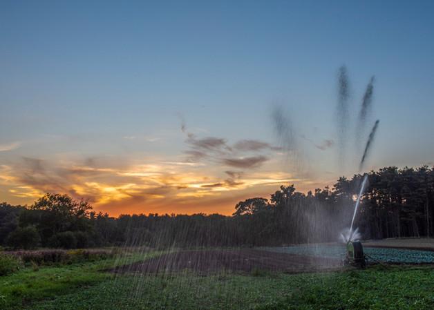 Irrigation in Underhill 1, august 2020,