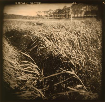 Appleton grasses.jpg