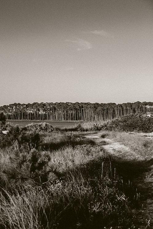 """""""Grayton Beach in Sepia #2"""""""