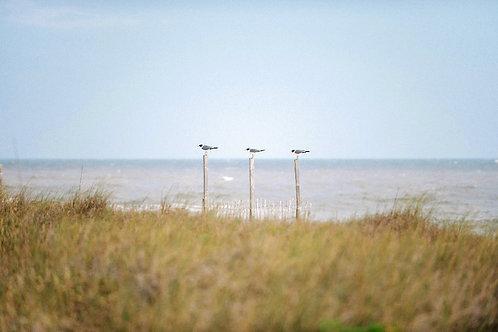 """Three Birds on a Fence Post"""
