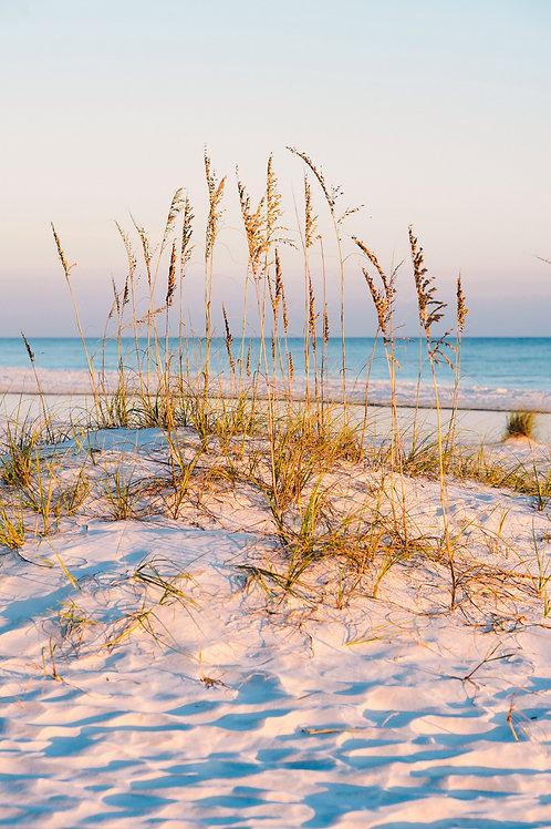 """Coastal Dune and Sea Oats"""