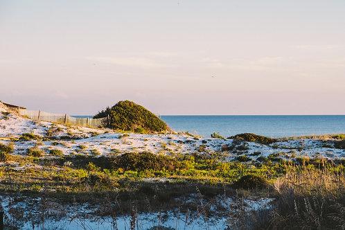 """""""Coastal Dune Landscape"""""""