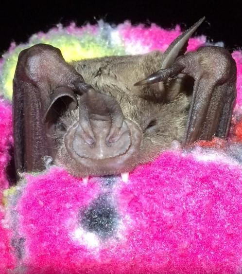 Tiny bat friends