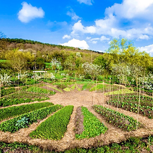 Stage permaculture