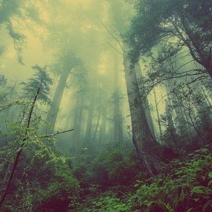 Cérémonie de cacao, honorer les arbres et les bois