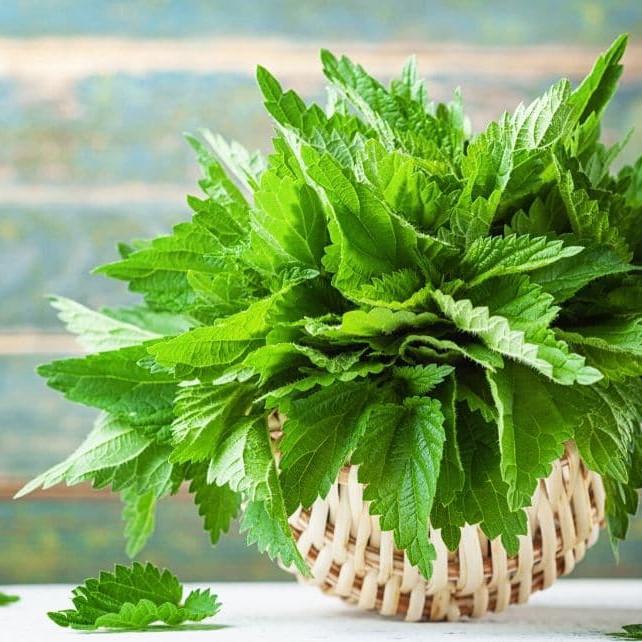 Journée plantes sauvages