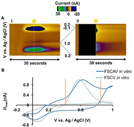 In Vivo Ambient Serotonin Measurements at Carbon-fiber Microelectrodes