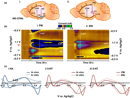 A Voltammetric and Mathematical Analysis of Histaminergic Modulation of Serotonin in the Mouse Hypot