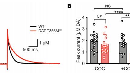 Autism-linked dopamine transporter mutation alters striatal dopamine neurotransmission and dopamine-