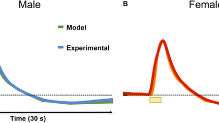 In vivo Hippocampal Serotonin Dynamics in Male and Female Mice: Determining Effects of Acute Escital