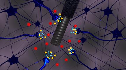 HA, Glu, & Cu Synapse3 (1).png