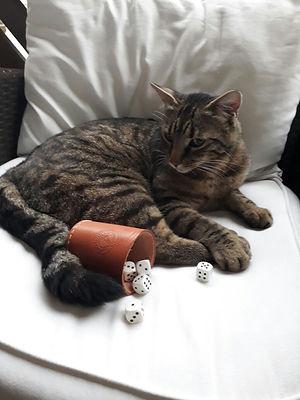 Katze 2.jpg