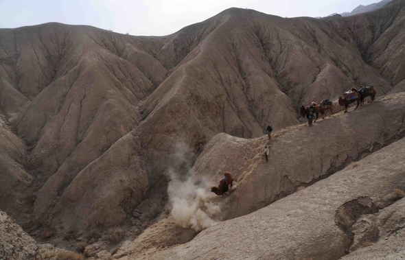 2011 expedition - a Bactrian camel falls