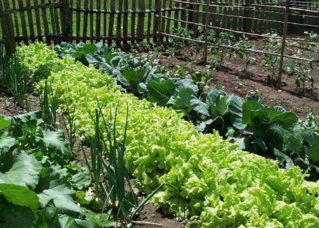 Eating Well with Community Sustainable Agriculture