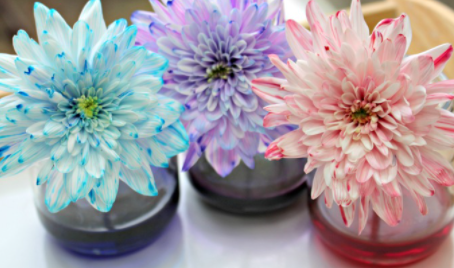 Colour Changing Flowers - Science Experiment