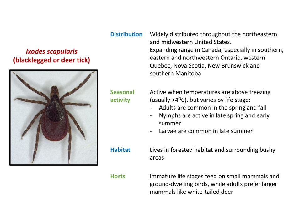 Ecology Ixodes scapularis