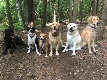 Adventure Crew