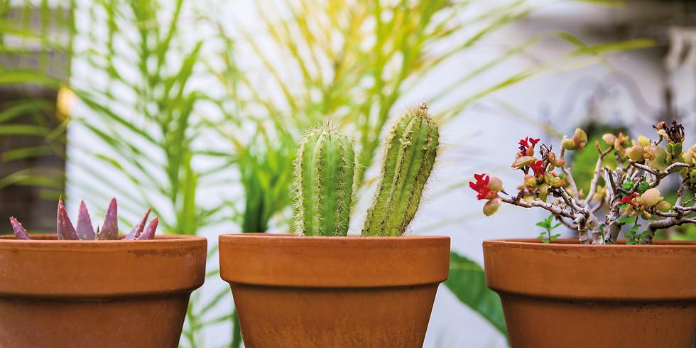 The Indestructible Houseplant