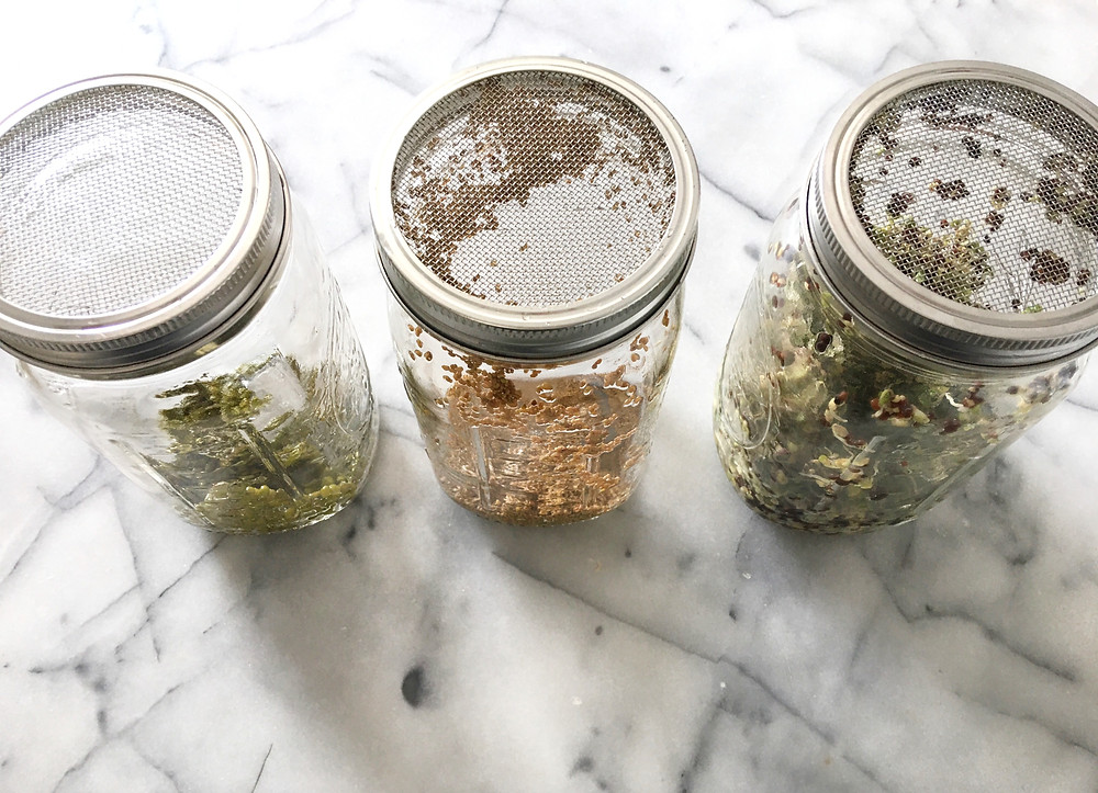 3 glass mason jars with microgreen seeds and sprouts on marble countertop