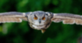 animal-animal-photography-avian-357159.j