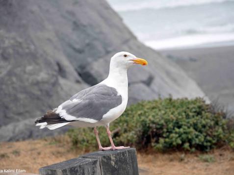 חופי אורגון