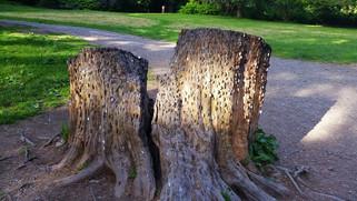 """הכסף (לא) גדל על העצים - """"עצי משאלות"""" באנגליה"""