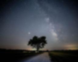 treeroadcrop4BETTERSTARS.jpg