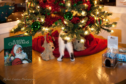 25 Cats of Christmas Contest