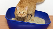 Solving the litterbox problem