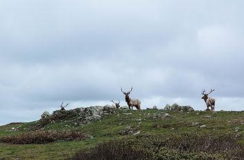reindeer-1209961.jpg