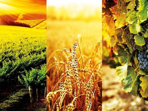 Contributo in c/interessi fino ad € 70.000,00 per sostenere l'insediamento dei giovani in agrico