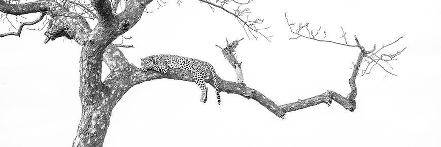 Andympics Leopard-8421.jpg
