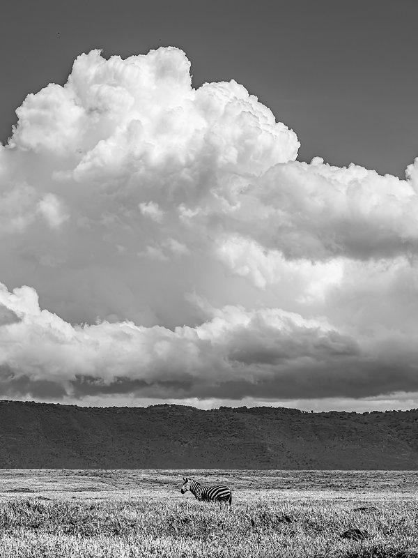 Ngorongoro LowRes -62.jpg
