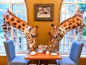 GiraffeManorZah-2454.jpg