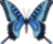 butterfly_PNG1014.png
