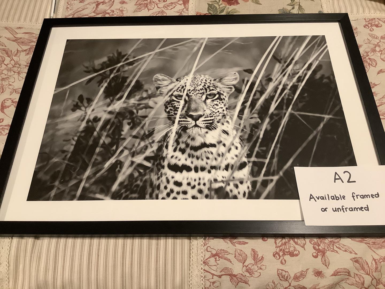 Leopard a2