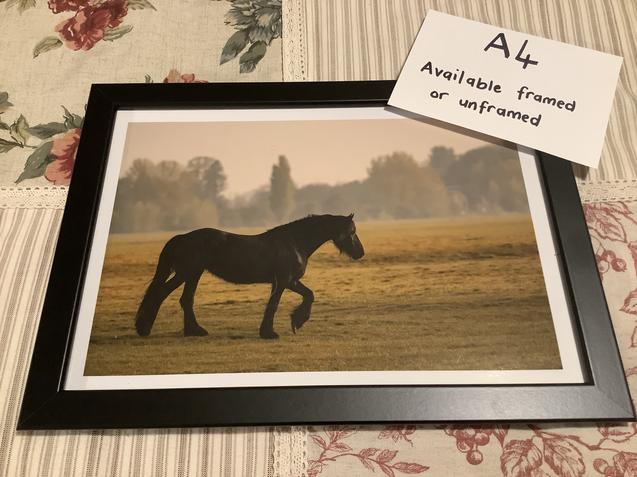 Stallion a4 colour
